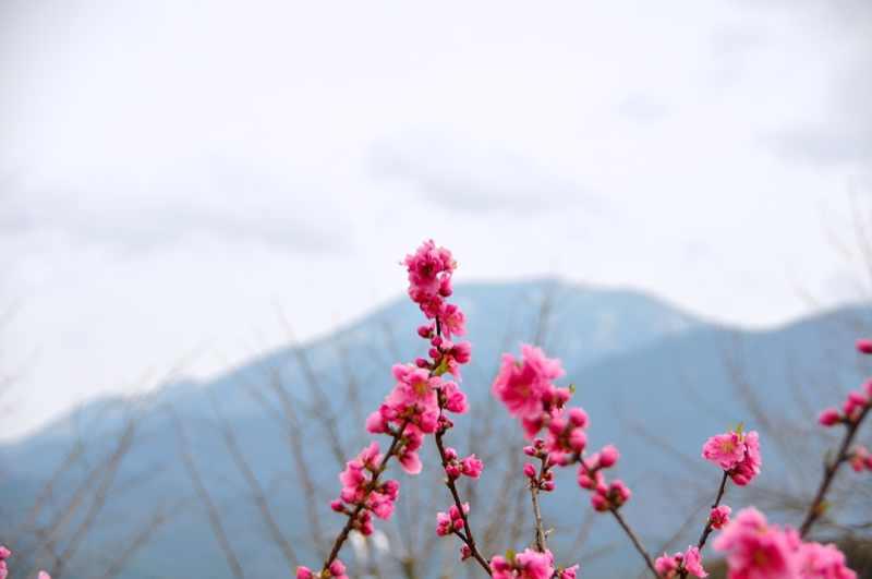 今日の恵那山 花曇り