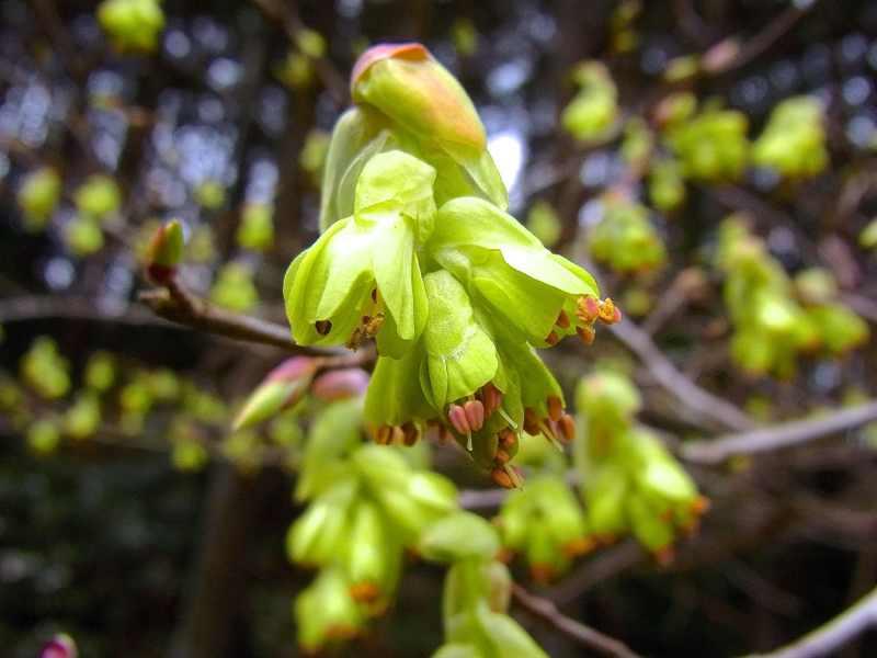 春を探そう、野に出よう- 11
