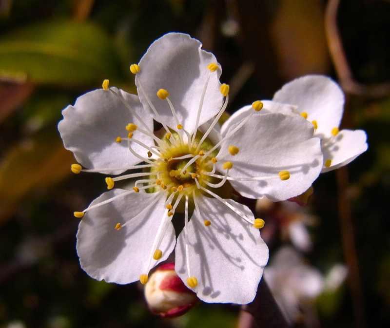 春を探しに長多喜へ 白梅開花