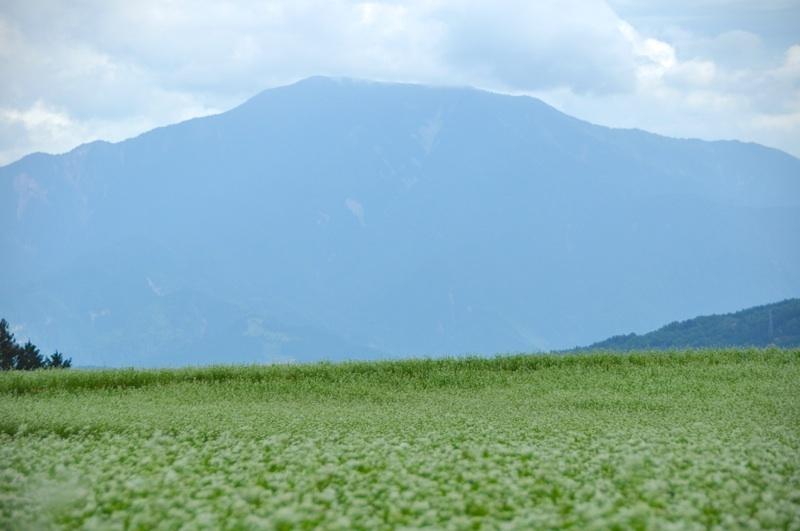 見事なそば畑と恵那山