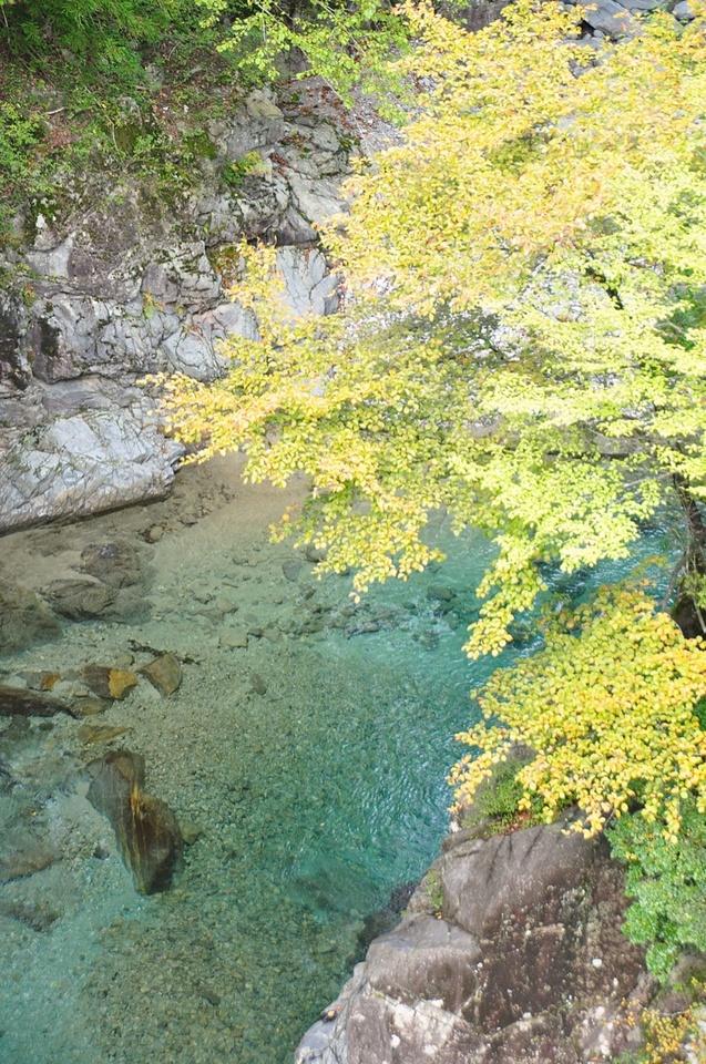 紅葉シーズン始まる 付知峡