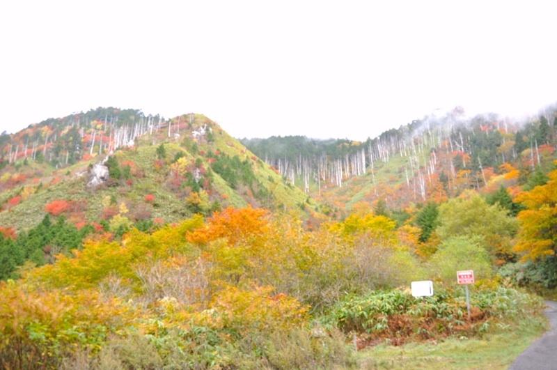 富士見台の紅葉