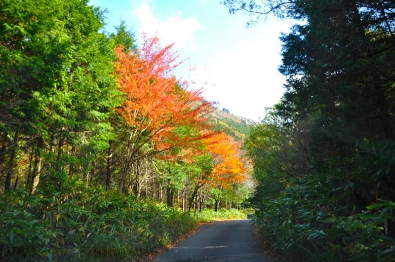 富士見台林道の紅葉、車中からの撮影。 border=