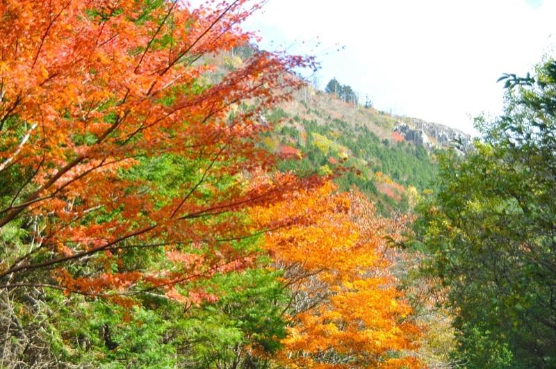 富士見台林道の紅葉、車中からの撮影。