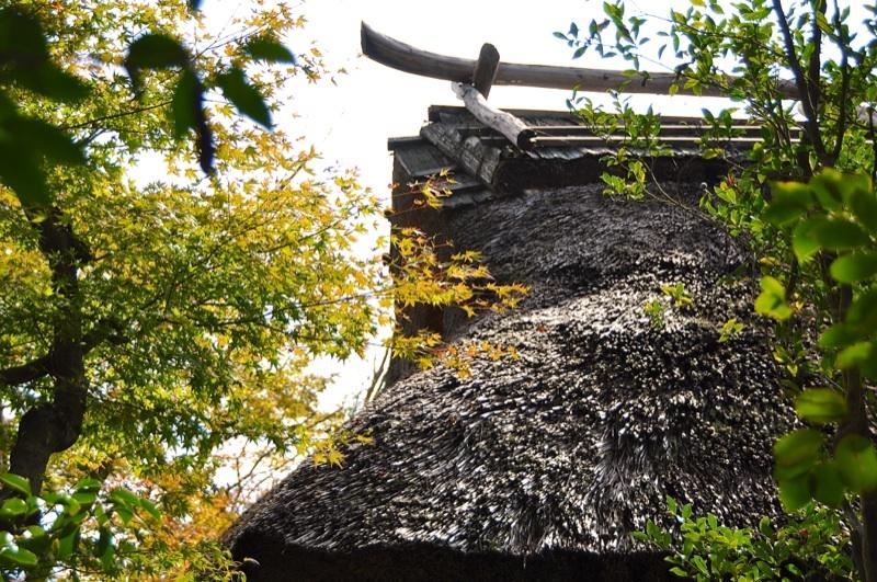 長多喜「彩りの秋」の 始まり - 2