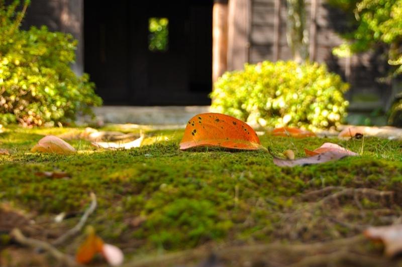 長多喜「彩りの秋」の 始まり - 3