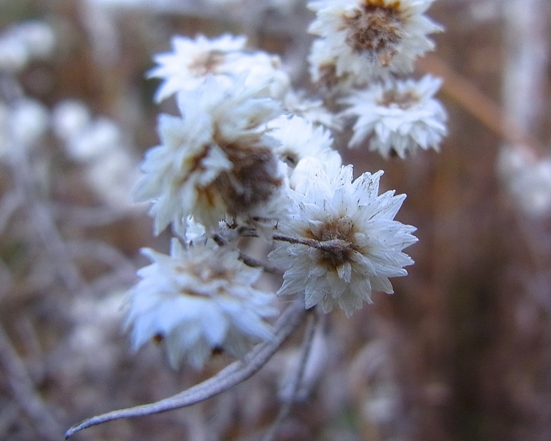 草花メッセージ  寒い寒い、冬の花