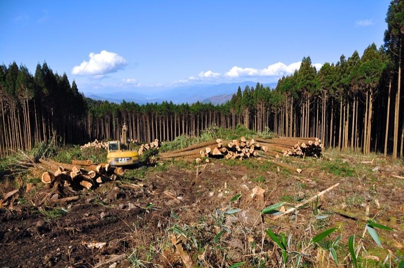 富士見台高原 国有林の伐採