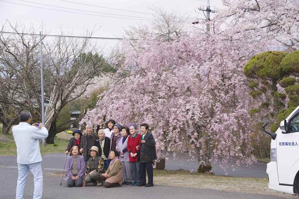 長多喜の枝垂れ桜はお散歩コース border=
