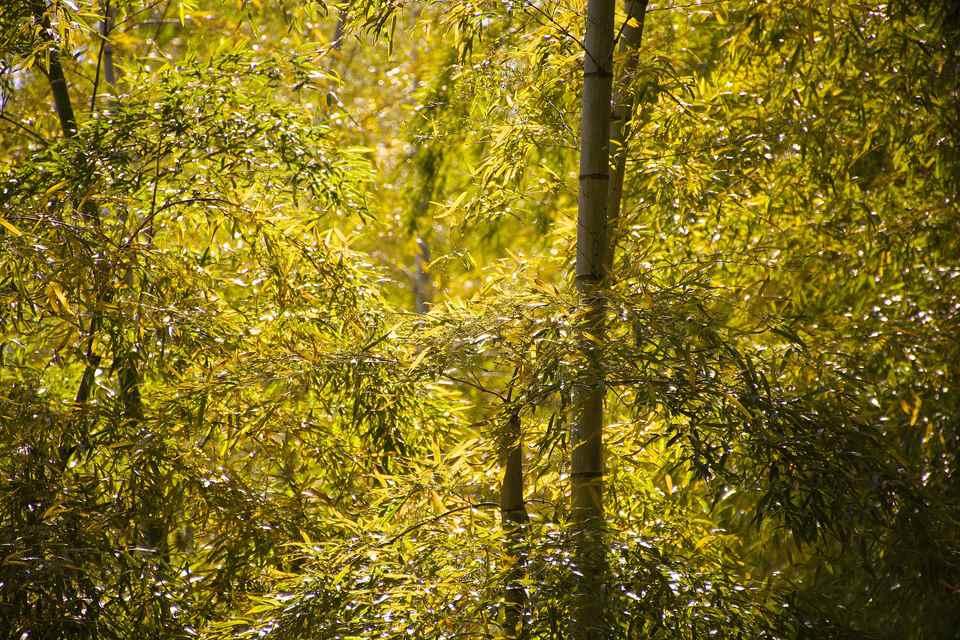 「竹の秋 」 中津川市落合