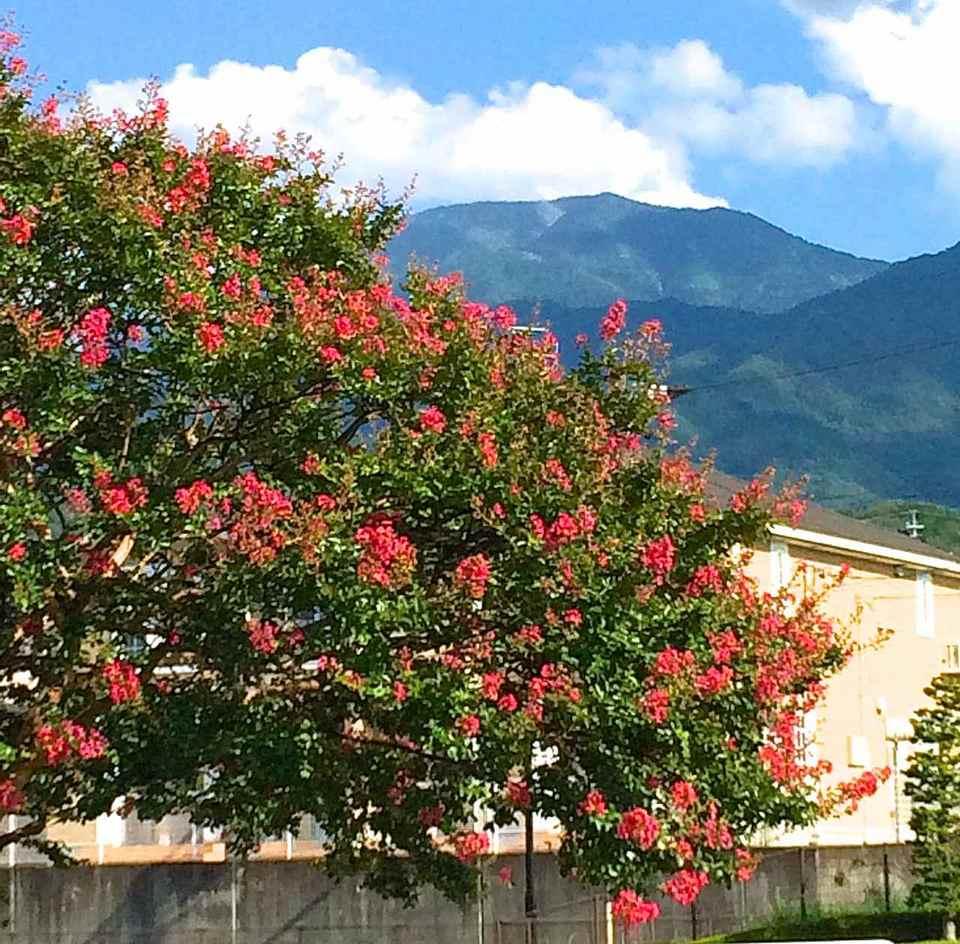 夏空に満開に咲く百日紅と恵那山
