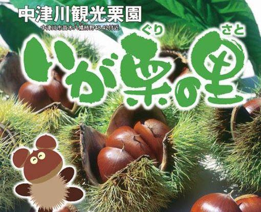 中津川観光栗園 いが栗の里 いよいよ「10月5日まで!」