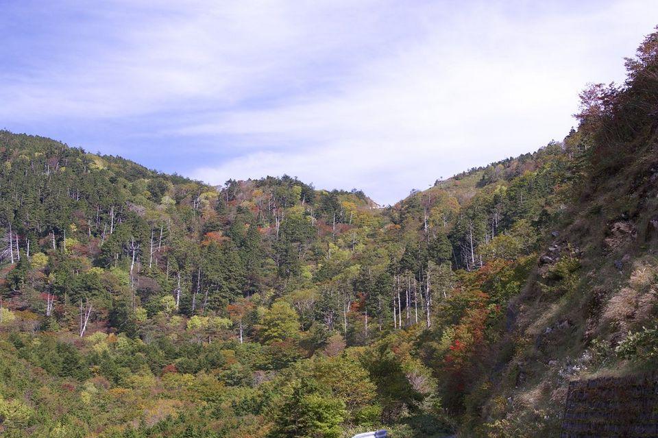 富士見台高原の紅葉は始まっていた。10/11 撮影 border=