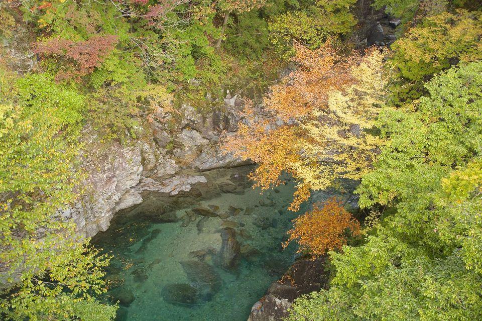 秋真っ盛りの攻め橋