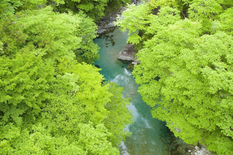 劇爽です、樹々の新緑とエメラルド水の饗宴。