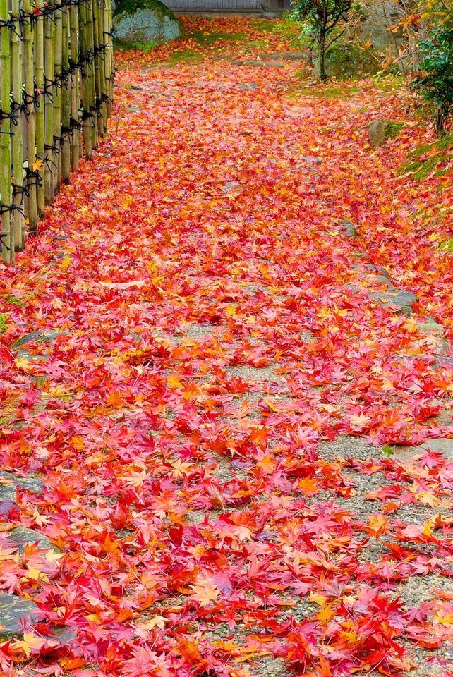 今年はこの紅葉に出会えるか?