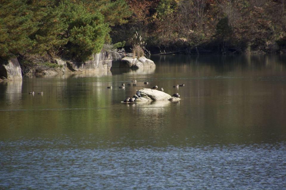 晩秋の高峰湖は水鳥の楽園