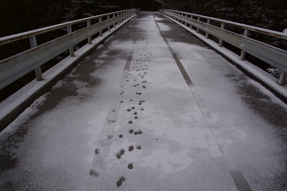 本谷橋のモノノケ足跡