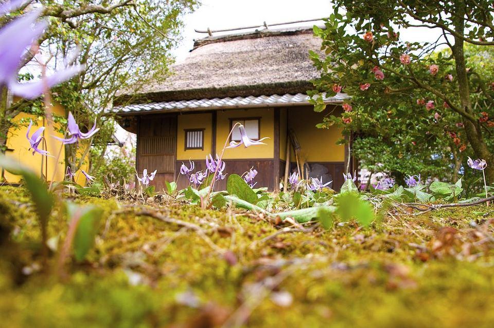 和の美、春の妖精カタクリの宿