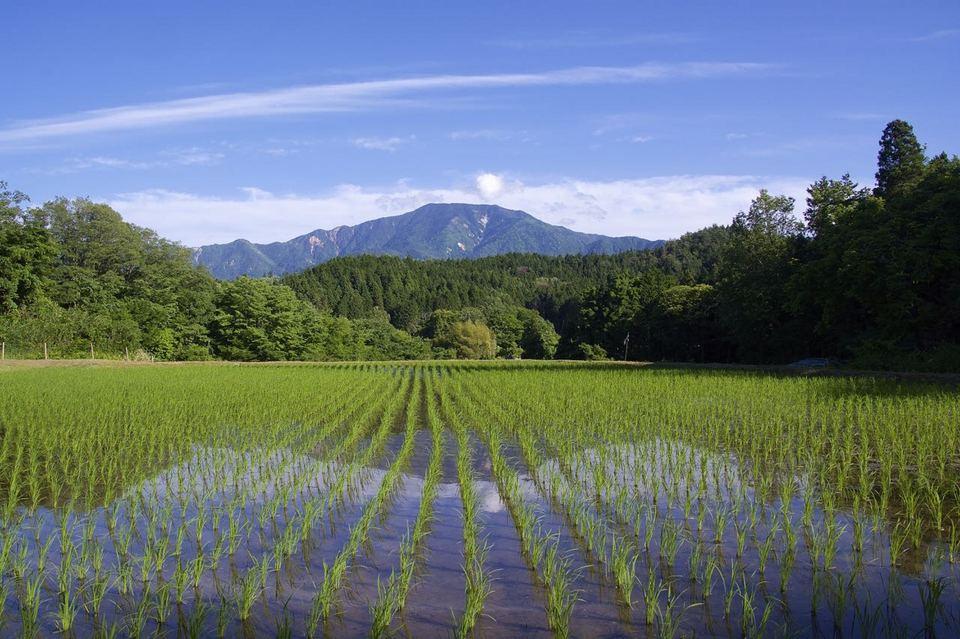 清々しいぞ ‼︎ 青田に恵那山。