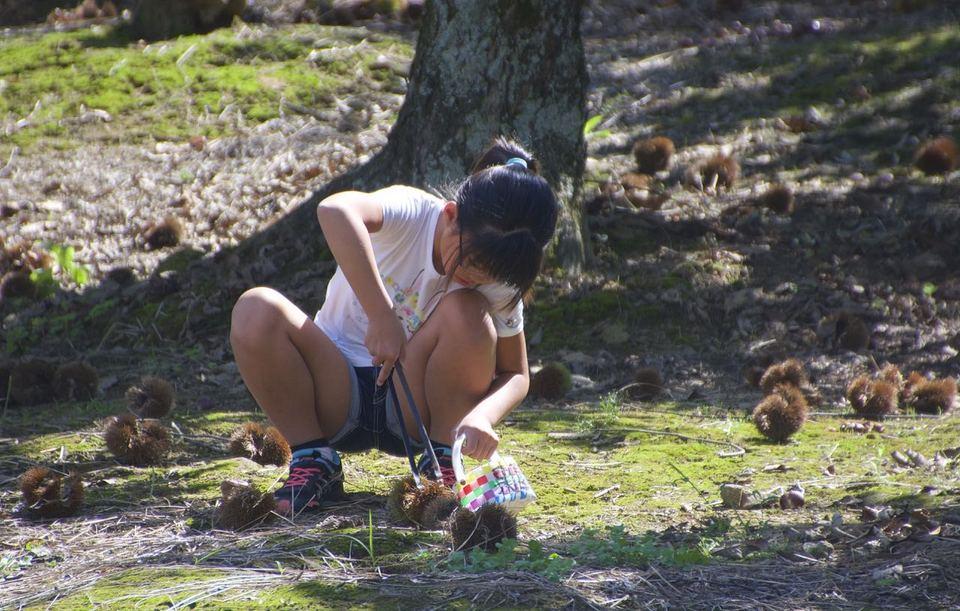 栗の郷 中津川の観光栗園「いが栗の里」OPEN ‼︎