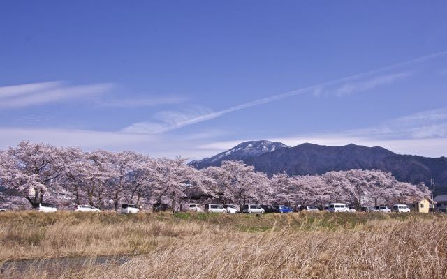 雪見恵那山と満開の本町桜 border=