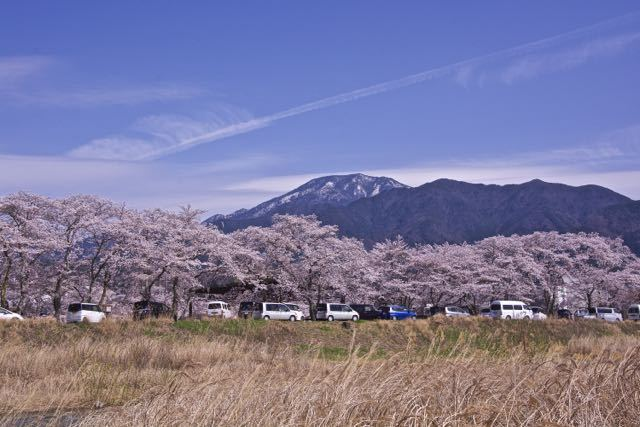 雪見恵那山と満開の本町桜