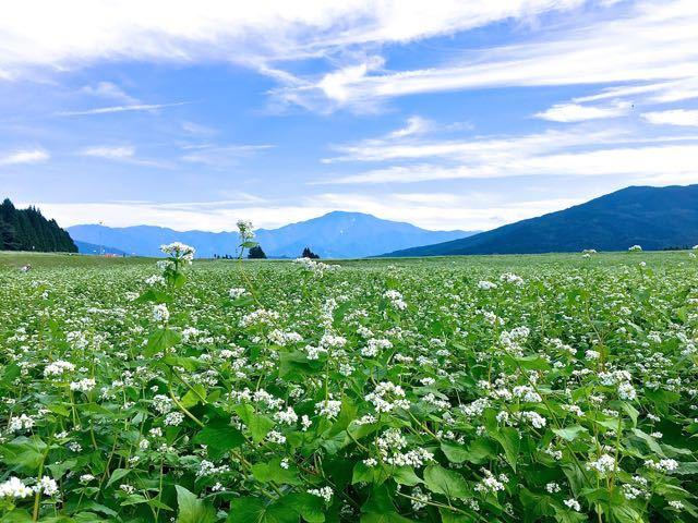 岐阜県のそばが綺麗で美しい花畑