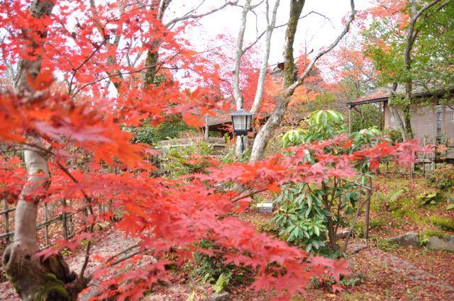 11月28日はイイニワ、「いい庭」の日