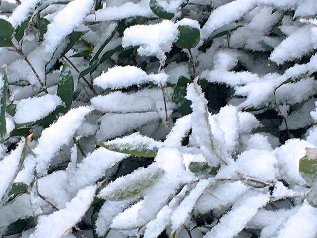 サラサラとささめ雪。