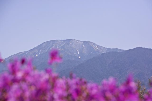 満開のツツジと恵那山。