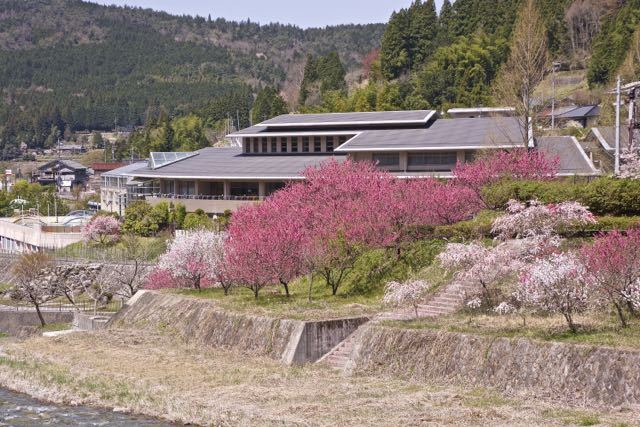 桜に続いてはハナモモが満開。