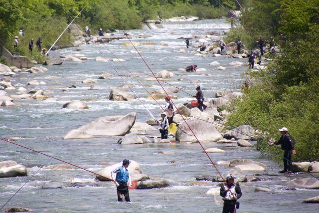 付知川のアユ解禁。