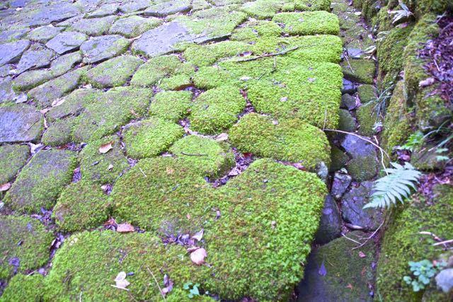 苔むす石畳。