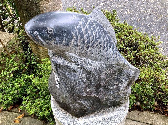 大人気の鯉恋大明神、頭がツルピカ。