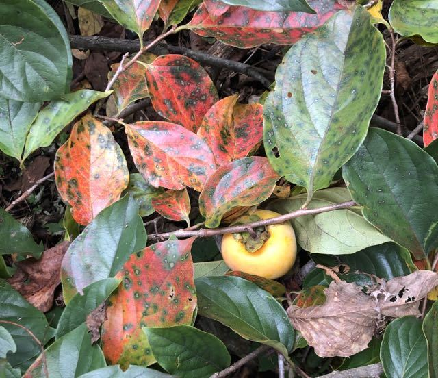 小さい秋見つけた。