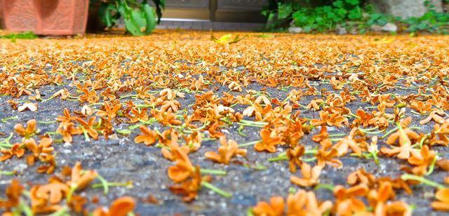 オレンジ色の絨毯 border=