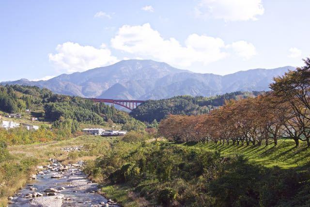 落合中学校桜並木の紅葉が進んできました. border=