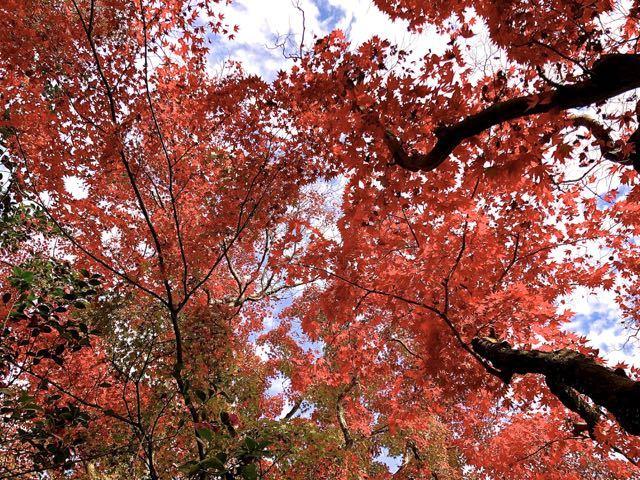 まさに錦秋、夜がらす山荘 長多喜の紅葉。