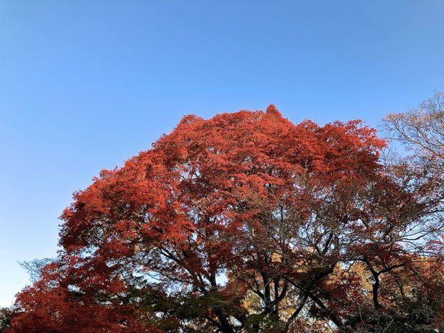 夜がらす山荘 長多喜の紅葉、最終章。