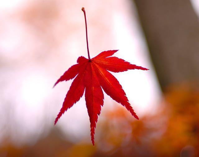 本日 11月28日はイイニワ「いい庭」の日、東濃で一番の紅葉の庭、料理旅館「長多喜」 border=