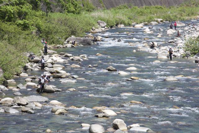 清流付知川のアユ漁解禁