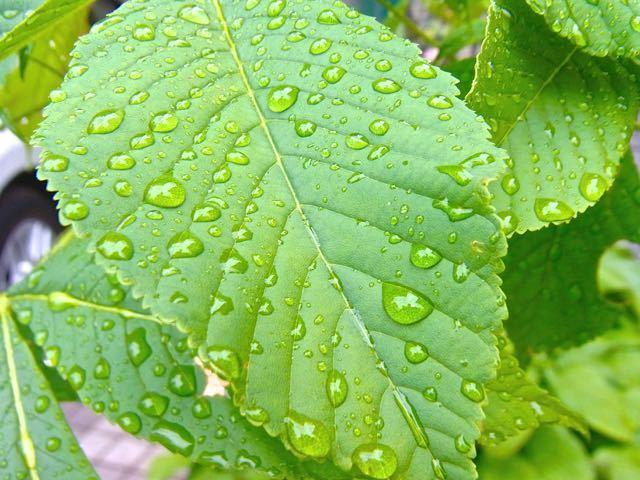 東海地方梅雨入りしました。