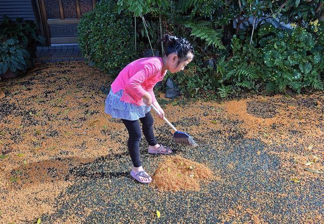 オレンジ色の絨毯
