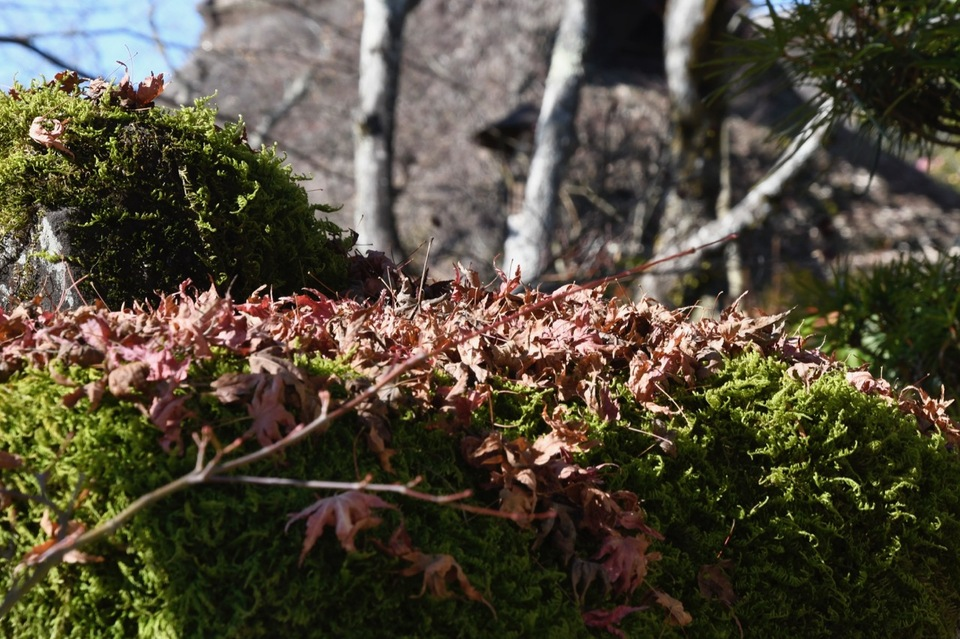 苔灯篭にもみじ葉と茅葺宿、日本の里山の風情。
