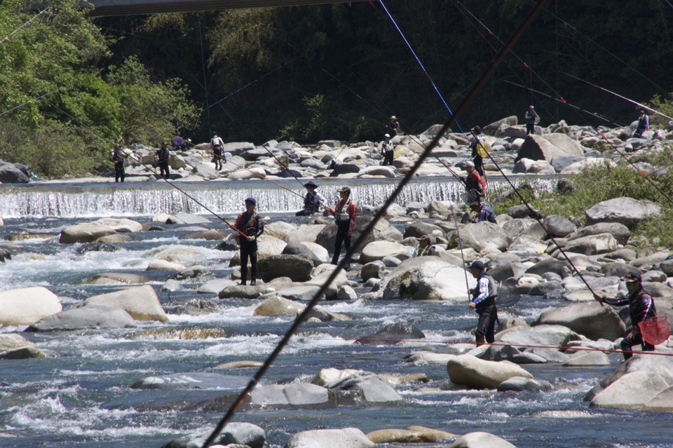 付知川の鮎釣り、いよいよ鮎解禁、
