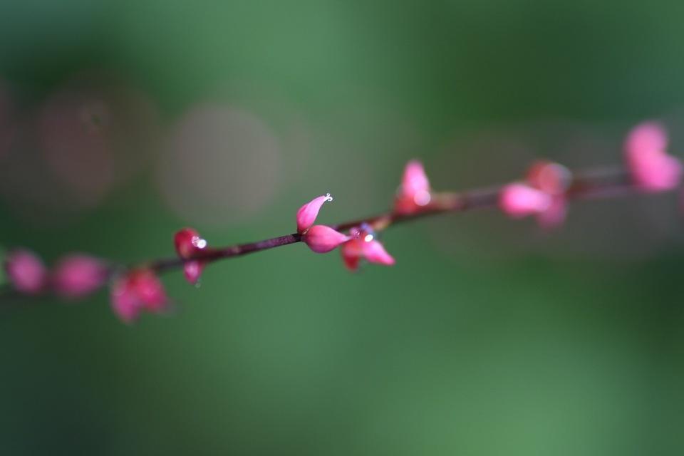 恵那山麓の草花 ミズヒキが木陰で紅白満開 ‼︎