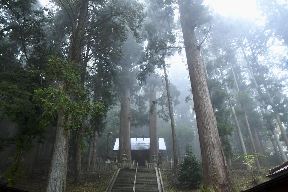 立冬の冷たい雨に煙る恵那神社本殿と千年杉。