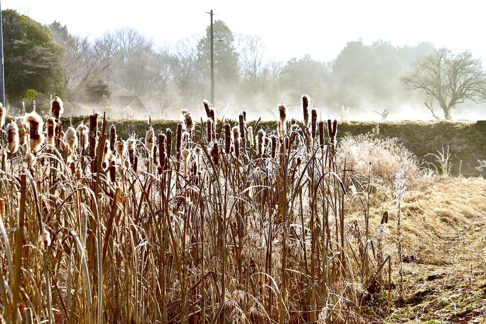 大寒の畑では