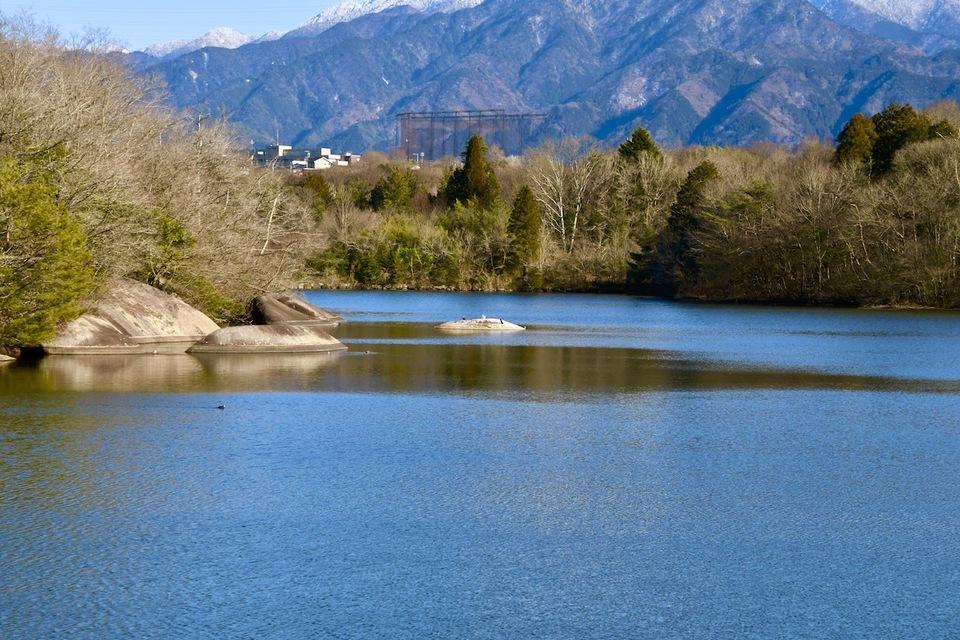 ひょうたん池で日向ぼっこの鵜と鷺、